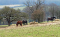 English chiltern landscape with horses grazing in a field Royalty Free Stock Image