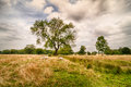 English countryside showing sheep grazing in the fields Stock Photos