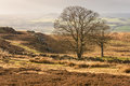 English coutryside in autumn moorland with trees Stock Image