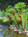 English Garden - Gunnera Royalty Free Stock Photos