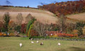 An english rural landscape in autumn the chiltern hills with grazing sheep a meadow Stock Image