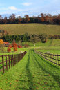 An english rural landscape in autumn with track between fields Stock Images