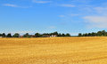 An english rural landscape in the chiltern hills with field of golden wheat stubble and hamlet distance Stock Images