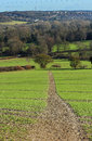 An english rural landscape in the chiltern hills with tack through field of crops Stock Photos