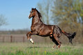 English thoroughbred horse jumping with a beautiful background Royalty Free Stock Photo