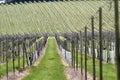 English vineyard in Springtime Stock Photo