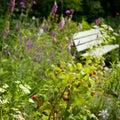 English wild garden Royalty Free Stock Photo