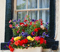 English Window Flower Box