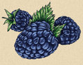 Engrave isolated BlackBerry hand drawn graphic illustration