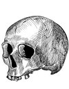 Engraved human skull drawn with illustrators brushes Royalty Free Stock Images