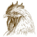 Engraving antique illustration of rooster head