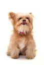 Enjoy Dog Royalty Free Stock Photo