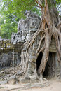 Enormous Tree Entwining Ta Som Temple, Cambodia Stock Images