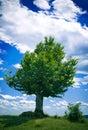 Ensam tree Royaltyfria Foton