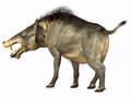 Entelodon omnivore was an omnivorous pig that lived in europe and asia in the eocene through the oligocene periods Stock Photos