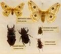Entomology set Royalty Free Stock Photo