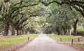 Entrance road to boone plantation charleston south the in carolina is lined with live oak trees covered with hanging moss Royalty Free Stock Photography