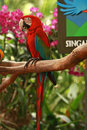 Entrance Of The Singapore Bird...