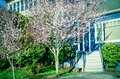 Entrance to blue house with blooming pink cherry flower in suburban Seattle Royalty Free Stock Photo