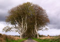 Entry to The Dark Hedges, on a straight road, Northern Ireland Royalty Free Stock Photo