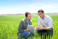Environment and agriculture agronomist looking at wheat quality with farmer Stock Image