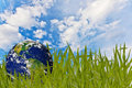 Environment concept, globe in the grass Royalty Free Stock Photography