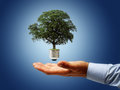 Environmental conservation sustainable resources renewable energy and concept Royalty Free Stock Images