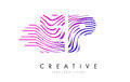 EP E P Zebra Lines Letter Logo Design with Magenta Colors