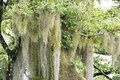 Epiphyte growing on a tree in the tropical climate of the cook islands Stock Photos