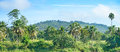 Equatorial forest Royalty Free Stock Photo