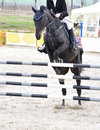 Equestrian jumping on black horse Royalty Free Stock Photo