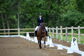 Equestrian riding at a dressage show Royalty Free Stock Photo