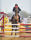 Equestrian sports a horse in action at an event Royalty Free Stock Image
