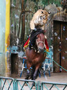 The equestrian tiger of circus