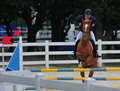 Equestrianism hurdle race recreational activities Royalty Free Stock Photography