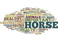 Equine Health Five Tips For A Healthy Horse Text Background Word Cloud Concept