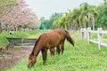 Equine standing with green grass horse in outdoor view near paddock Royalty Free Stock Images