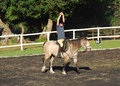 Equine therapy a little caucasian girl exercising in her horse riding lesson on her pony Royalty Free Stock Photos