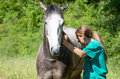 Equine veterinary great performing a scan to a young mare Royalty Free Stock Images