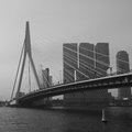 Erasmusbrug in rotterdam the is a beauityfull piece of architecture Royalty Free Stock Photos
