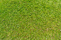 Erba verde esterna naturale Fotografia Stock