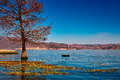 Erhai lake the tree in yunnan china Royalty Free Stock Image