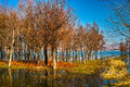 Erhai lake the tree in yunnan china Royalty Free Stock Photography