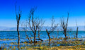 Erhai lake the tree in yunnan china Royalty Free Stock Photos