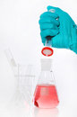 Erlenmeyer flask and Syring fillter Royalty Free Stock Images