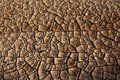 Erosion and drought barren land landslides dry cracked earth Stock Photography