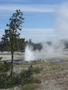 Erupting Geyser Stock Photo