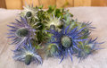 Eryngium planum Blue Sea Holly flowers on fabric background Royalty Free Stock Photo