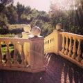 Escaleras viejas hermosas en el forest park Fotografía de archivo
