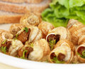 Escargot Royalty Free Stock Photo